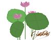 !s Lotus hasu