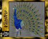 (V)Animated, Peacock,