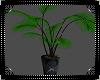 S Plant