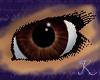 Tigers Eye Eyes F