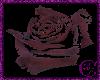 Worn  Rose
