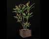 Aari Lux Plant 1