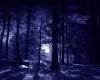 B.F Dark Forest Dome