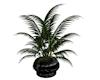 Heart Plant 2