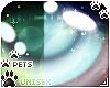 [Pets] Quin | eyes 2-T