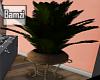.B. LS Plant