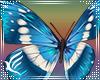 Head Butterflys