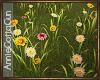 Sunset Valley Flowers