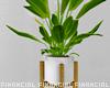 Minimalist Flower Plant