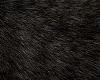 Black Tail