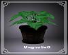 ~MG~ Plant