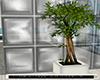 Naturals plant deco