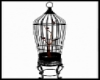 Animated birds in cage