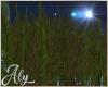 Moon Grass