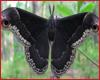 Moth- Special Req.