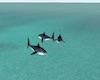 Sugar Isle Shark ride