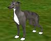 Silver Greyhound