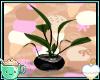 !XD!M°Aoi:PlantV1