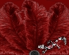 Tenni Red Feather fans