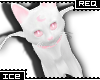 Ice * White Pink Cat Req