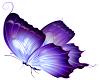 Vibrancy Butterfly 2