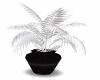 Black & White Plant