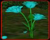 !    BLUE ROSE