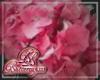 Pink Hydrangea Flower R