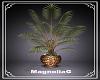 ~MG~ J&D Plant