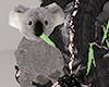 [NR]Cuddle Koala