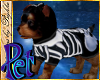 I~Yorkie*Skelly Pet