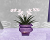 Purple Wedding Plant