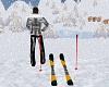 LS Aminated Ski's