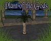 Plant of the Gods