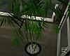 ϟ Asian Bamboo v.1