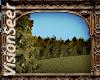 Forest Hilltop