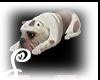 =S= Laying Bull Dog