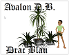 plantas avalon DB