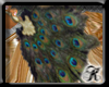[ks] Peacock Feather Fan