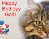 Cat Happy Birthday Goat
