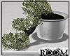!R! Bonsai tree
