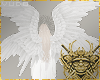 Albino Wings Rqt