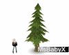 [X]Pine Tree