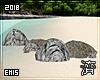 !E! Tropic Beach ROCKS
