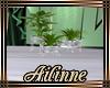 Ballroo plant 2