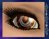 {A} Stricken Eyes ~ Fall