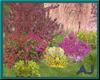 (AJ) Garden Affair