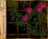 I~Rose Trellis*Fuschia