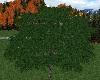 ATS~ Mountain Cedar Tree