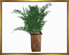 Potted Fern Derive